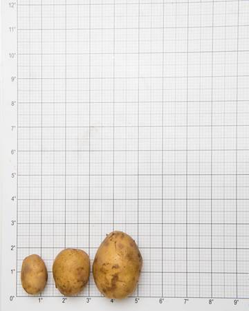 Potato-German-Butterball-Size-Grid-1-of-1