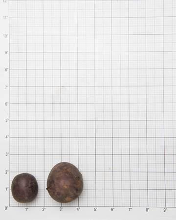 Potato-Huckleberry-Grid-1-of-1