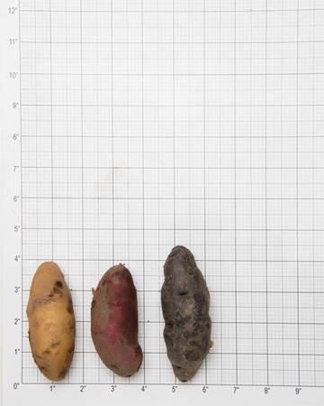 Potato-Fingerling-B-Size-1-of-1