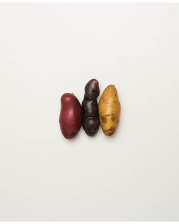 Potato-Mixed-Fingerling-C-1-of-1