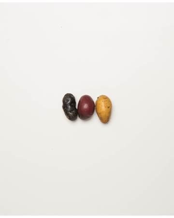 Potato-Mixed-Fingerling-E-1-of-1