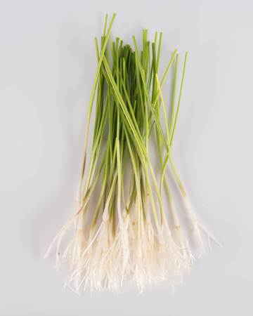 Allium-Leek-Traditioinal-Demi-Isolated