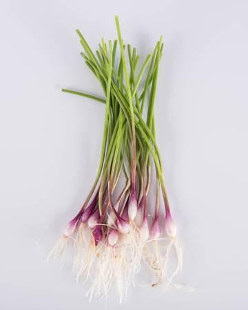 Allium-Onion-Purplette-Petite-Isolated