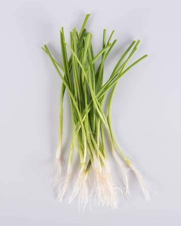 Allium-Onion-Demi-White-Coin-Isolated