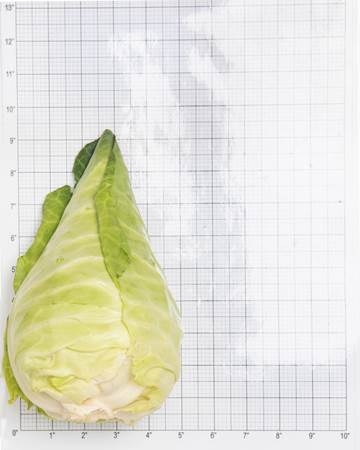 Pointed-Cabbage-2
