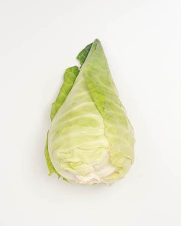 Pointed-Cabbage