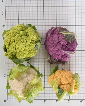 Cruciferous-Cauliflower-Mixed-Baby-Size Grid