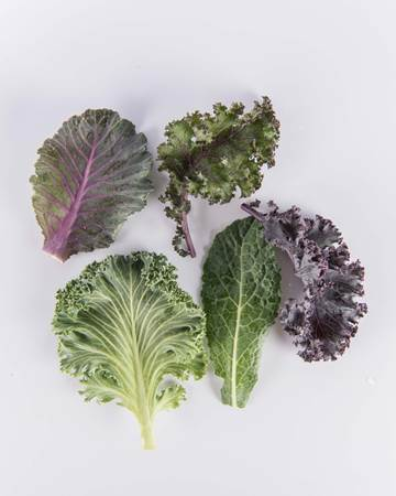 Kale-Exotic-Baby-Isolated