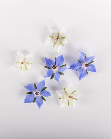 Borage Mix