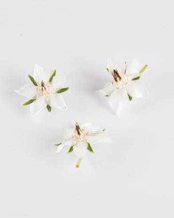 Edible Flowers-Borage-White-Isolated