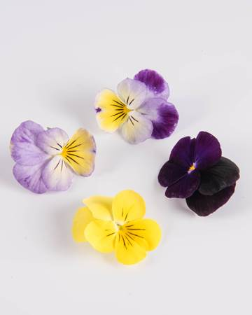 Edible Flower Johnny Jump Up Mixed Isolated