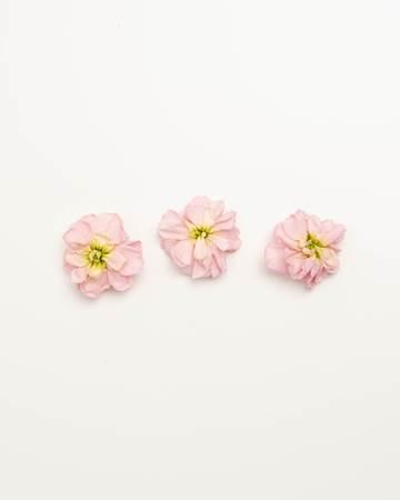 Edible-Flower-Mini-Floret-Apricot-Punch