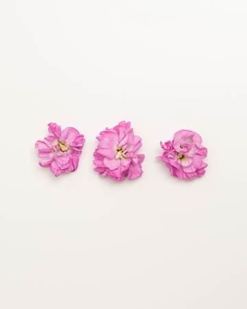 Edible-Flower-Mini-Floret-Bubble-Gum