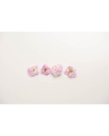 Edible-Flower-Mini-Floret-Iron-Cherry