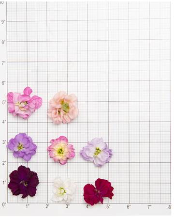 Edible-Flower-Mini-Floret-Mixed-Size-Grid