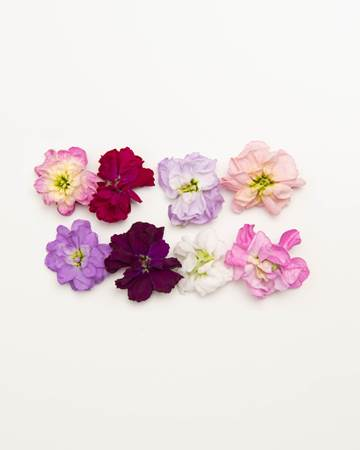 Edible-Flower-Mini-Floret-Mixed
