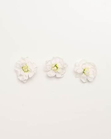 Edible-Flower-Mini-Floret-White