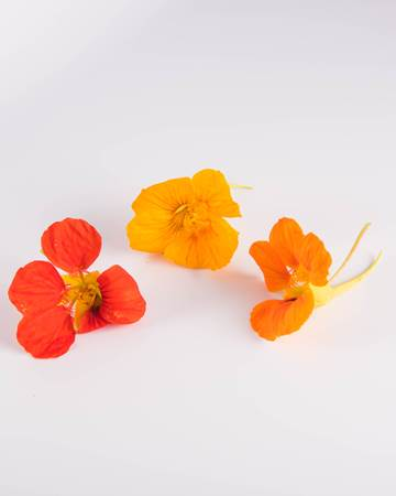 Edible Flower-Nasturtium-Isolated
