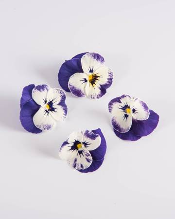 Edible Flower-Viola-Blueberry-Swirl-Isolated