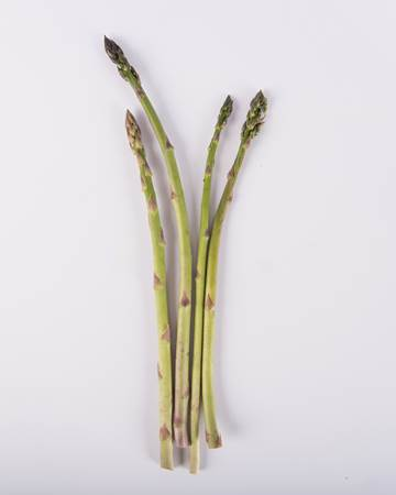 Asparagus-Green-Baby-Isolated