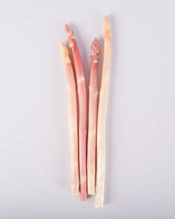Asparagus-Pink-Blush-Pencil-Isolated