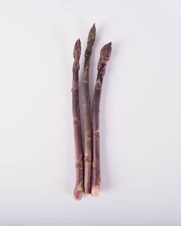 Asparagus-Purple-Pencil-Isolated