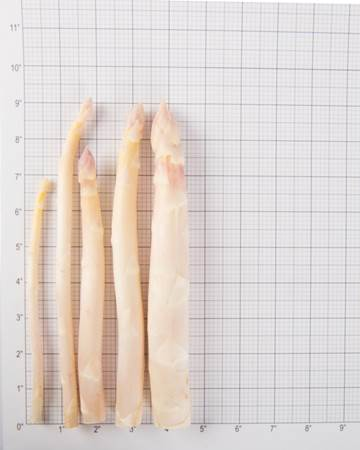 Asparagus-White-Size-Grid