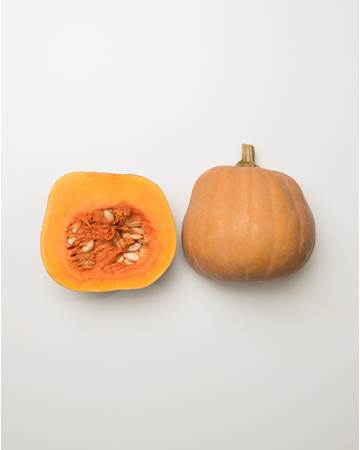 Squash-Fall-RobinsKogiNut-Isolated