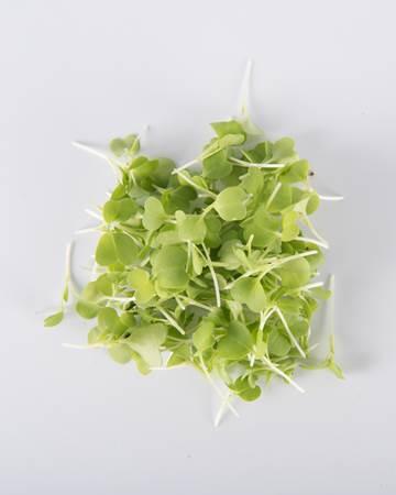 Micro Green Mizuna