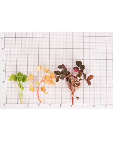 Sorrel-Petite-Mixed Lucky-Size Grid