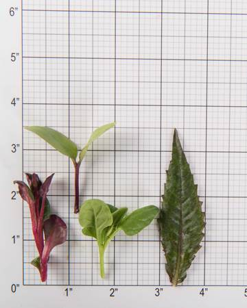 mixed-petite-spinach-size-grid