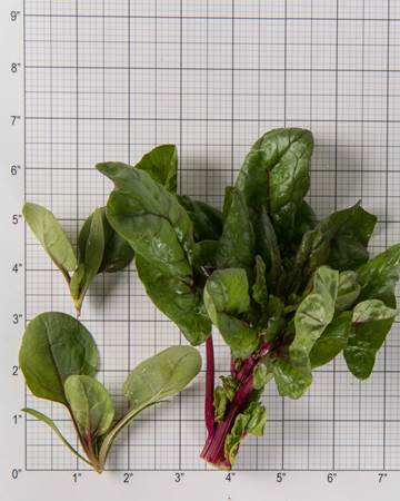 simply-red-spinach-size-grid