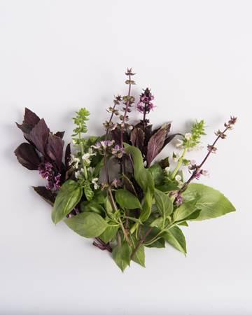 Mixed Basil Blooms