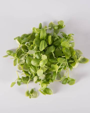Basil-Micro-Isolated
