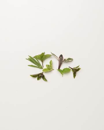 Herb-Sampler-demi-Isolated
