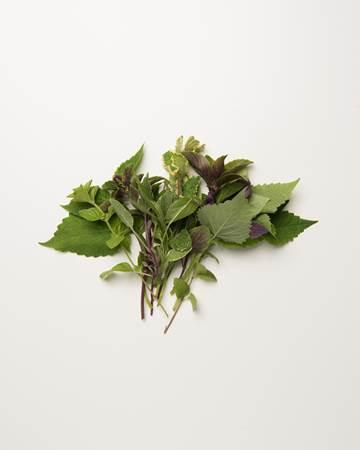 Herb-Sampler-Fullsize-Isolated