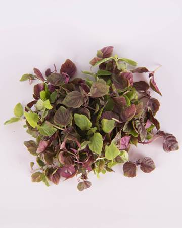 Shiso-Micro-Mixed-Isolated