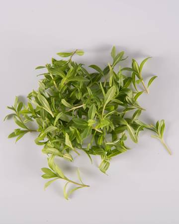 Tarragon-Micro-Isolated