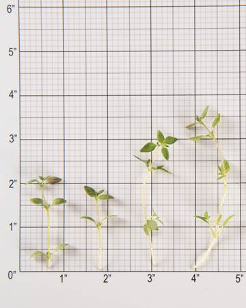 Thyme-Size Grid