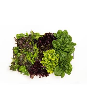 LettuceSpinachGreensBox-1-of-1