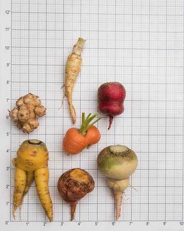 Ugly Mixed Vegetables Size Grid