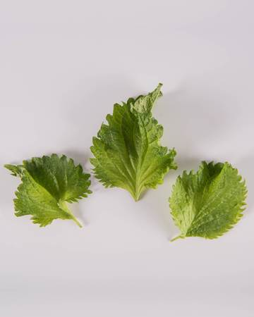 Shiso-Green-Leaves-Isolated