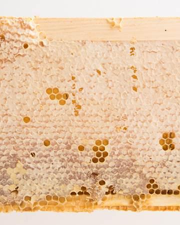 Honey-Whole-Frame-Close-Up
