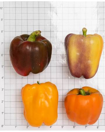 Full-Size-Peppers-Size-Grid