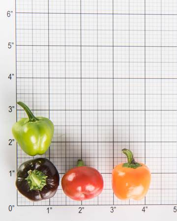Peppers-Bell-Mixed-Baby-Size-Grid