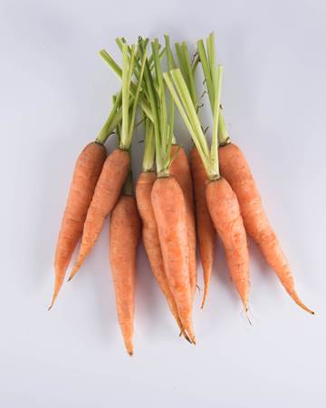 Carrot-Long-Baby-Isolated