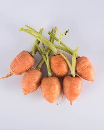 Carrot Round Baby Isolated