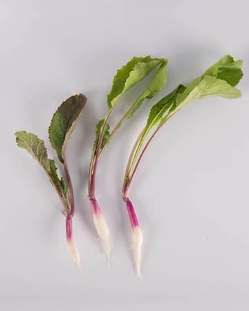 Turnip-Royal Purple-Petite-Size-2