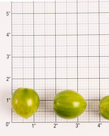 Green Bee Tomato Size Grid
