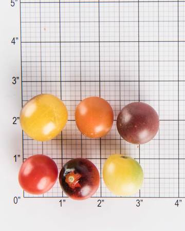 Tomatoes-Baby-Specialty-Mix-Size-Grid-2